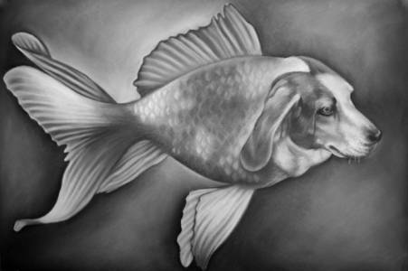 Beaglefish